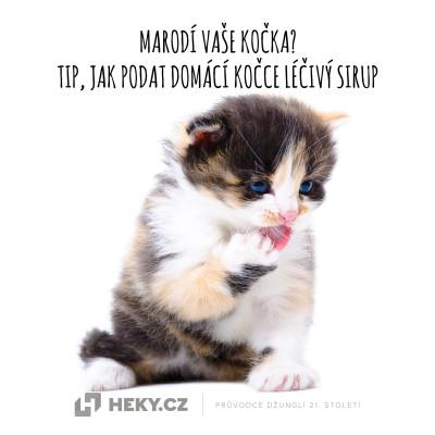 Marodící kočka