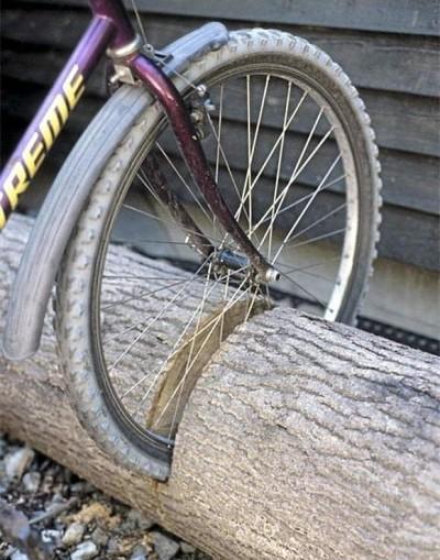 kolo v kmeni