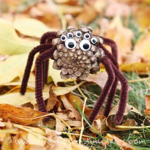 pavouček z šišky1
