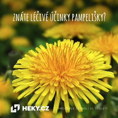 Znáte léčivé účinky pampelišky?