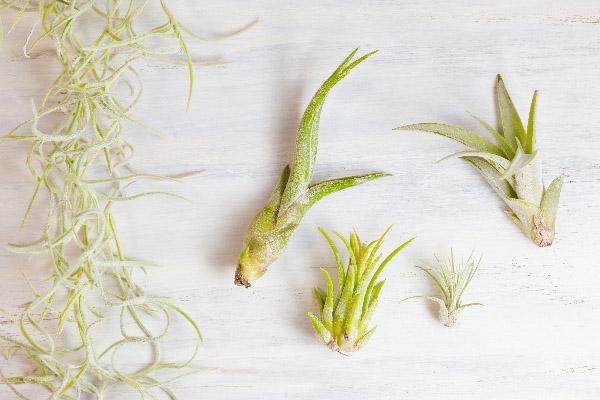 Korkové mini květináče - airplants