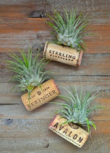 air-plant-wine-bottle-cork-magnets-crafts-home-decor-repurposing-upcycling (1)